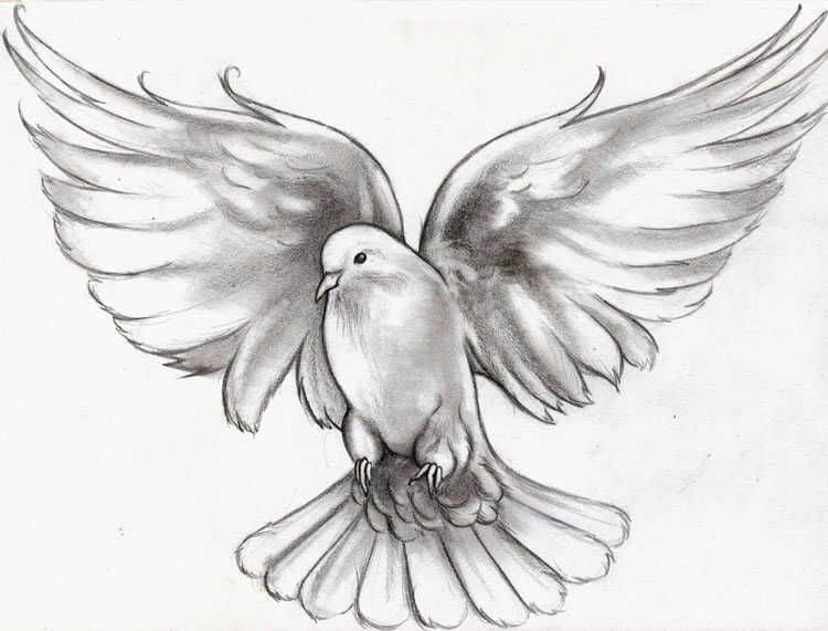 A guide on best of the dove tattoos ideas 14