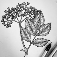 Elderberry leaves design